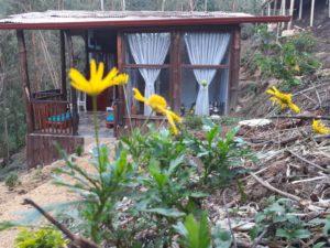 habitacion del bosque