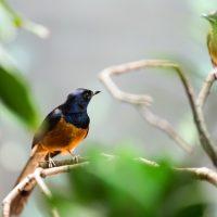 avistamiento de aves Manizales