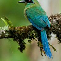 Avistamiento de aves Manizales, aves