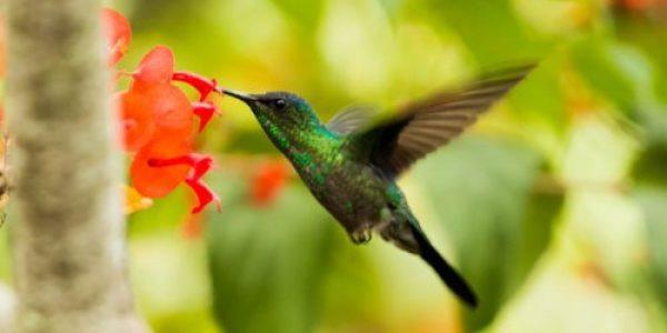 Colibri en flor